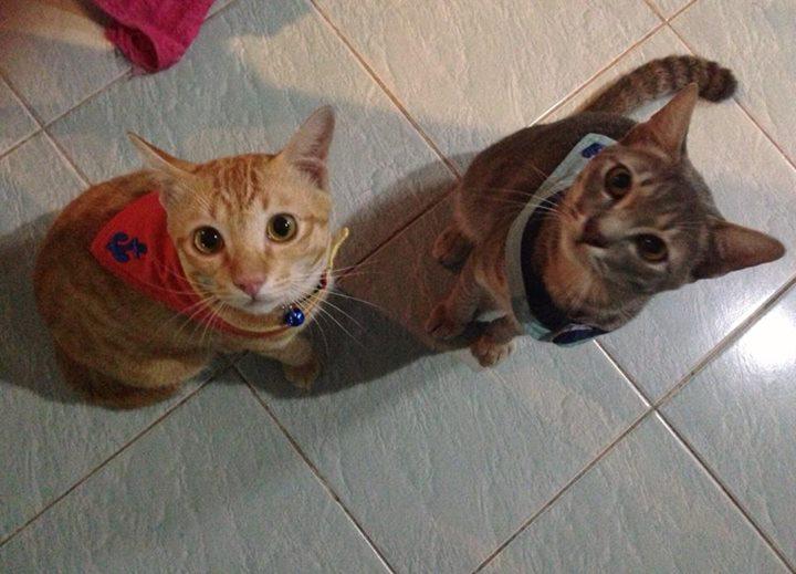 タイの猫たち